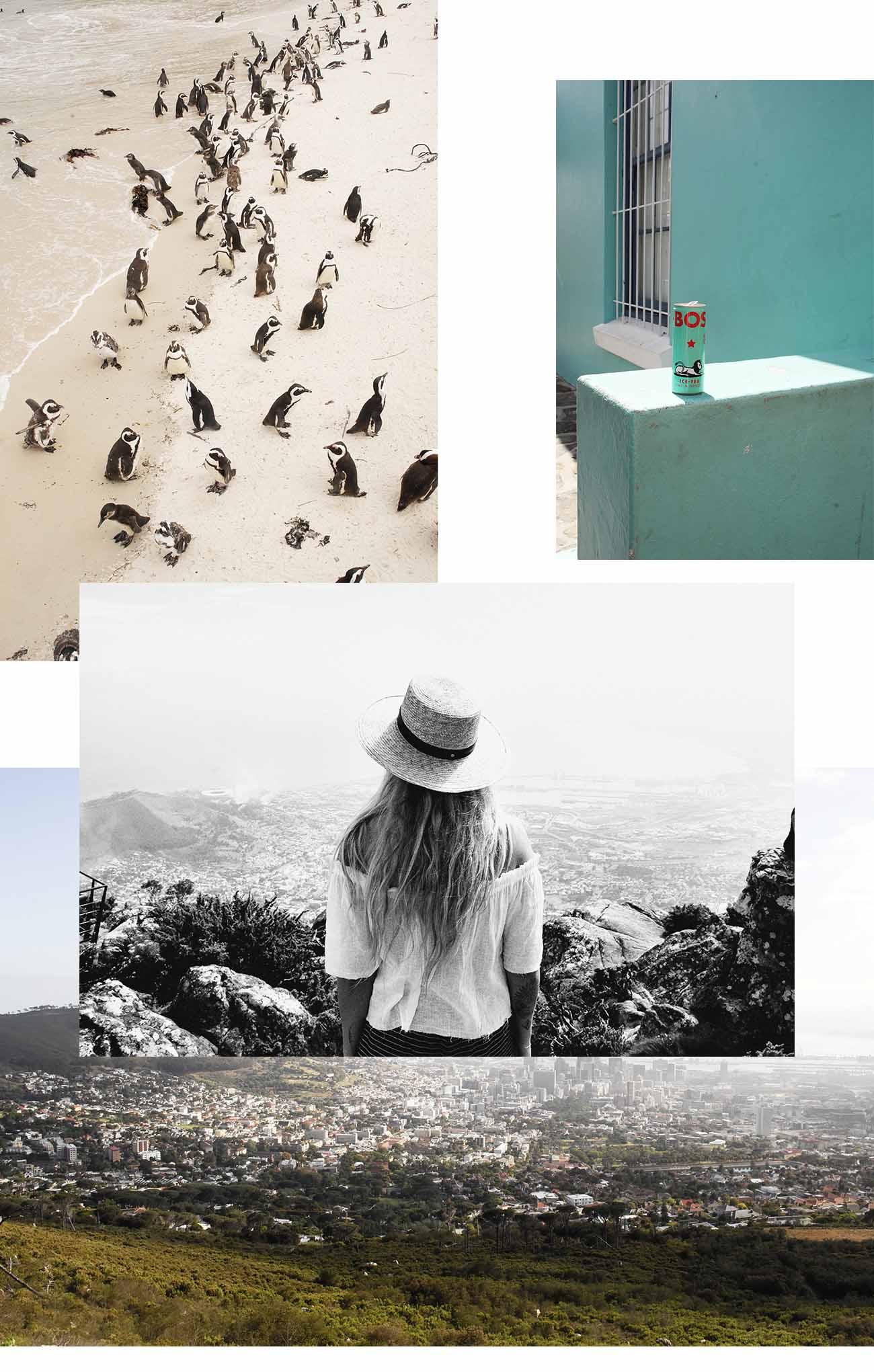 pingouins-beach-capetown