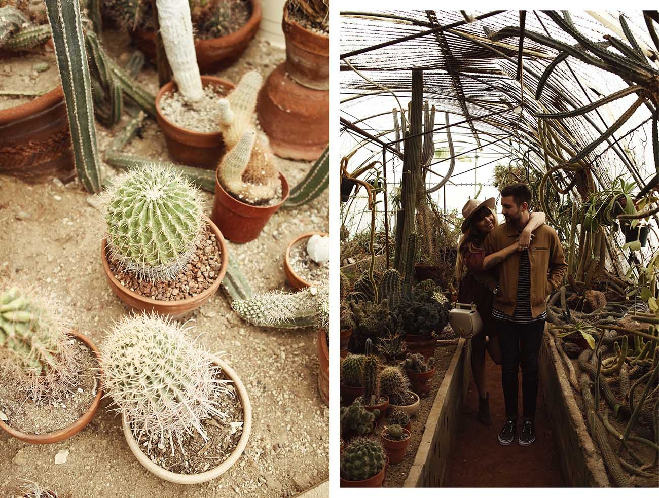 fringeandfrange-cactusgarden-ps