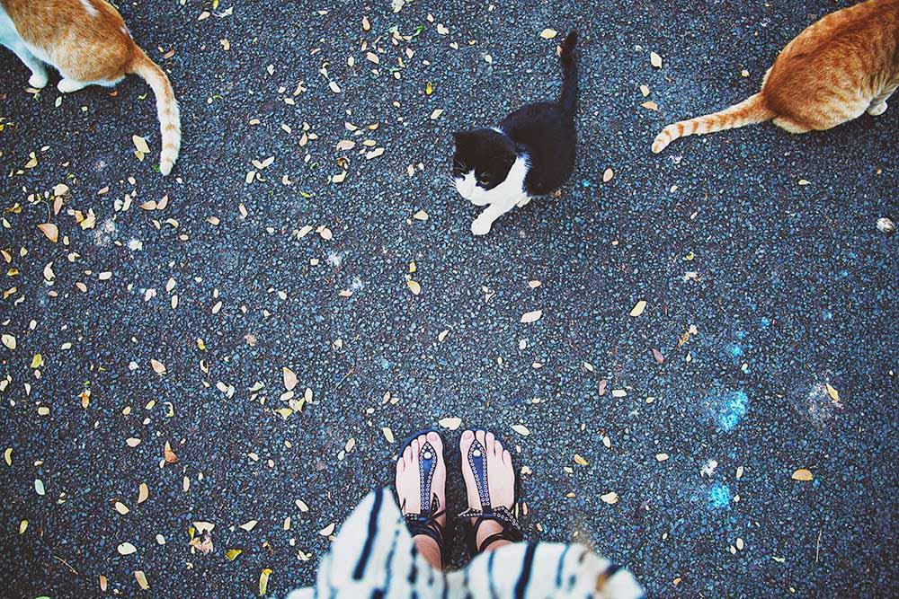 isabelmarant edriss cats
