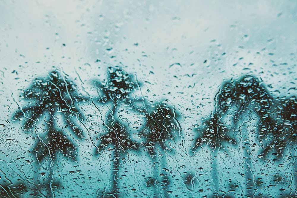 palm trees rain