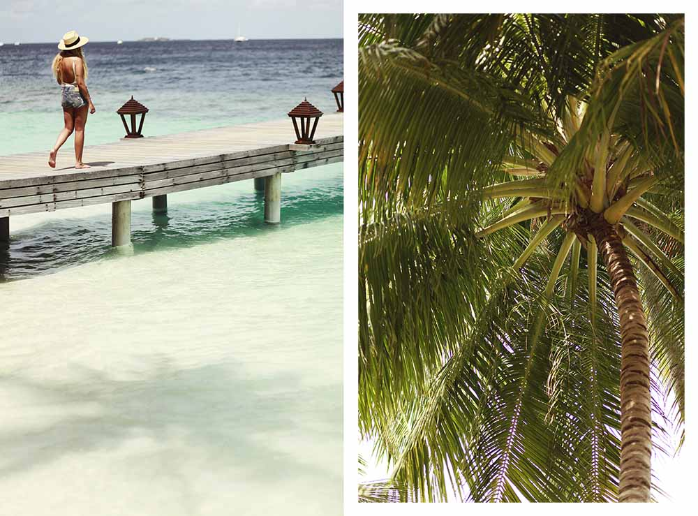 ihuru palm trees