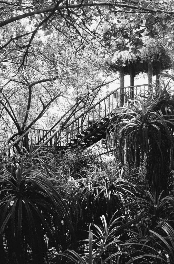 jungle maldives