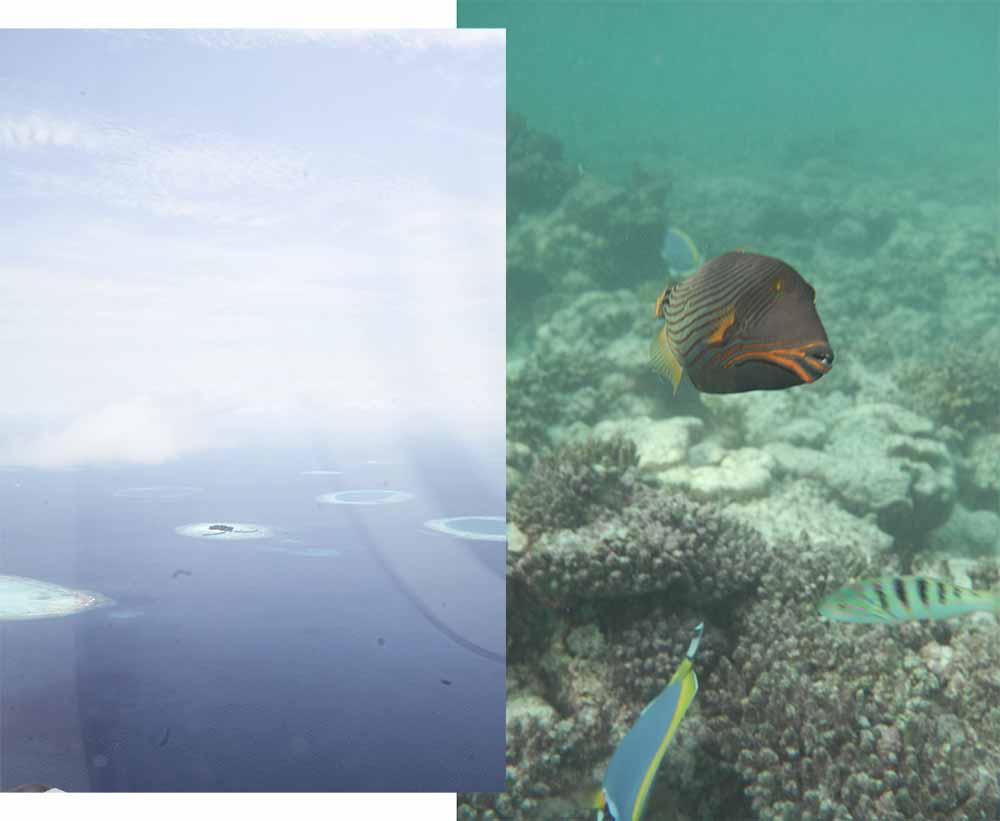 maldives summer 2016