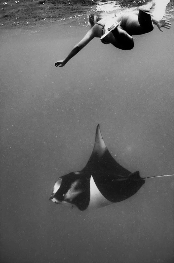 mantaray maldives