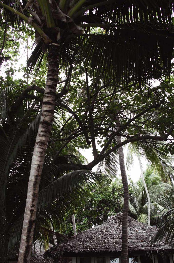 villa palm trees